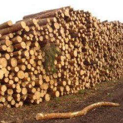 Регулирование экспорта леса