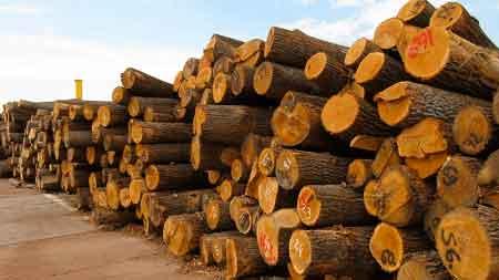 Экспорт леса в Китай могут запретить