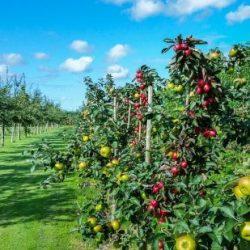 Российские аграрии не получат  преференции по пониженной ставке НДС на фрукты и овощи