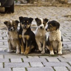 В Госдуме предлагают маркировать бездомных животных
