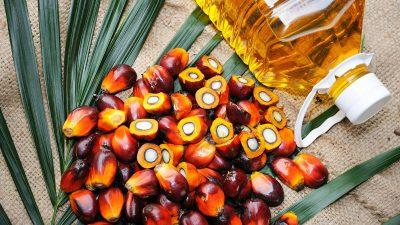 В России наметилось снижение импорта пальмового масла